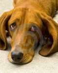 perro-triste-thumb4686132